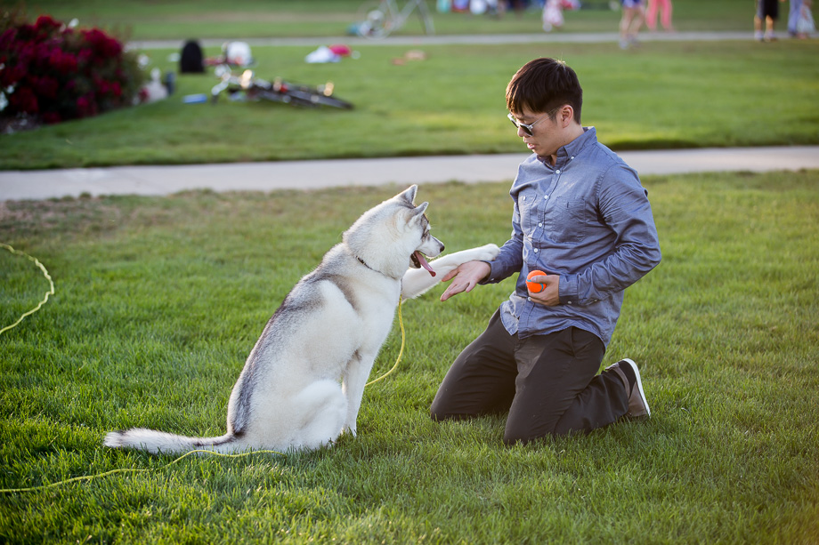 adorable husky shakes paw with her owner
