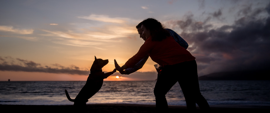 silhouette shot of high five a puppy - san francisco engagement photos