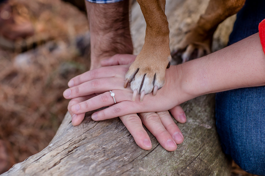 cute engagement photo - hands and tiny paw