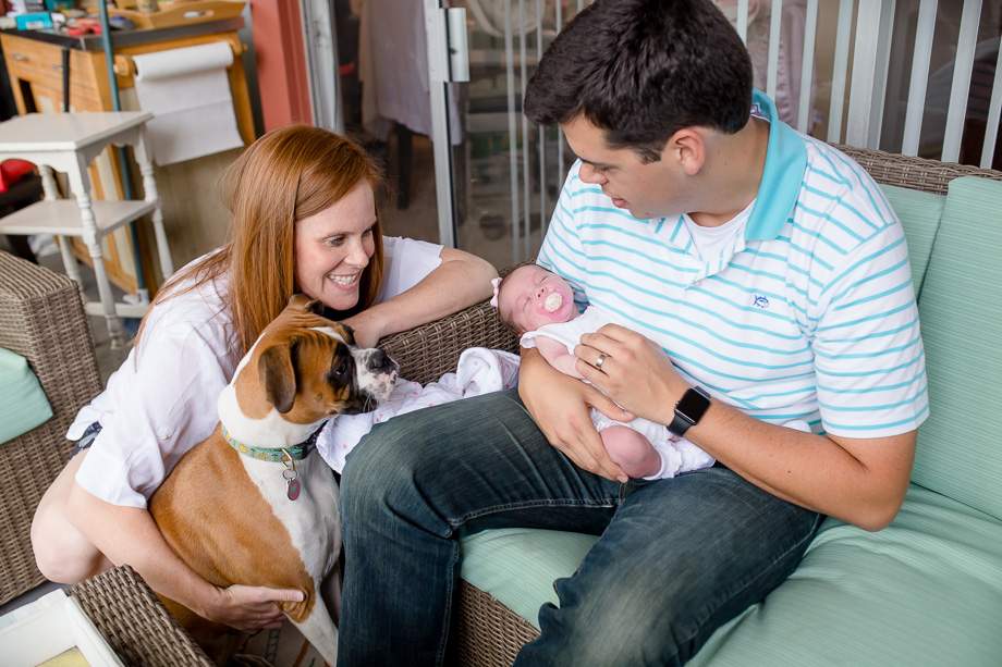 introducing the puppy to the newborn baby girl - los gatos lifestyle family photographer