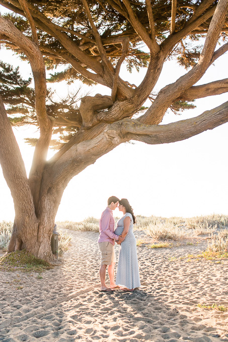 romantic family and maternity photo under a huge cypress tree on the Pacifica State beach