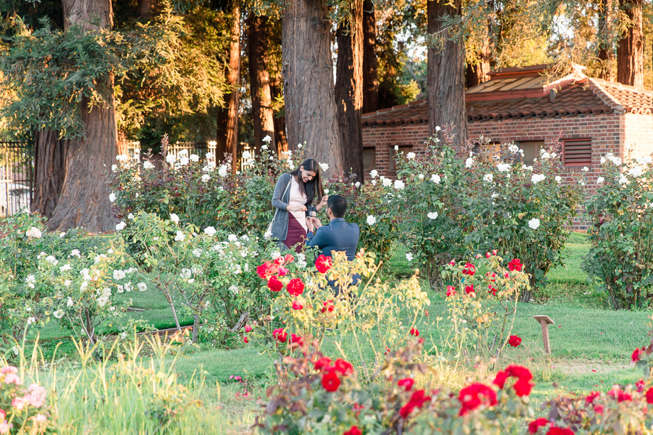 Roses In Garden: San Jose Municipal Rose Garden Surprise