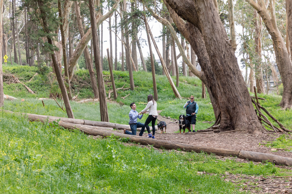 san francisco lovers lane at the presidio wood line surprise proposal