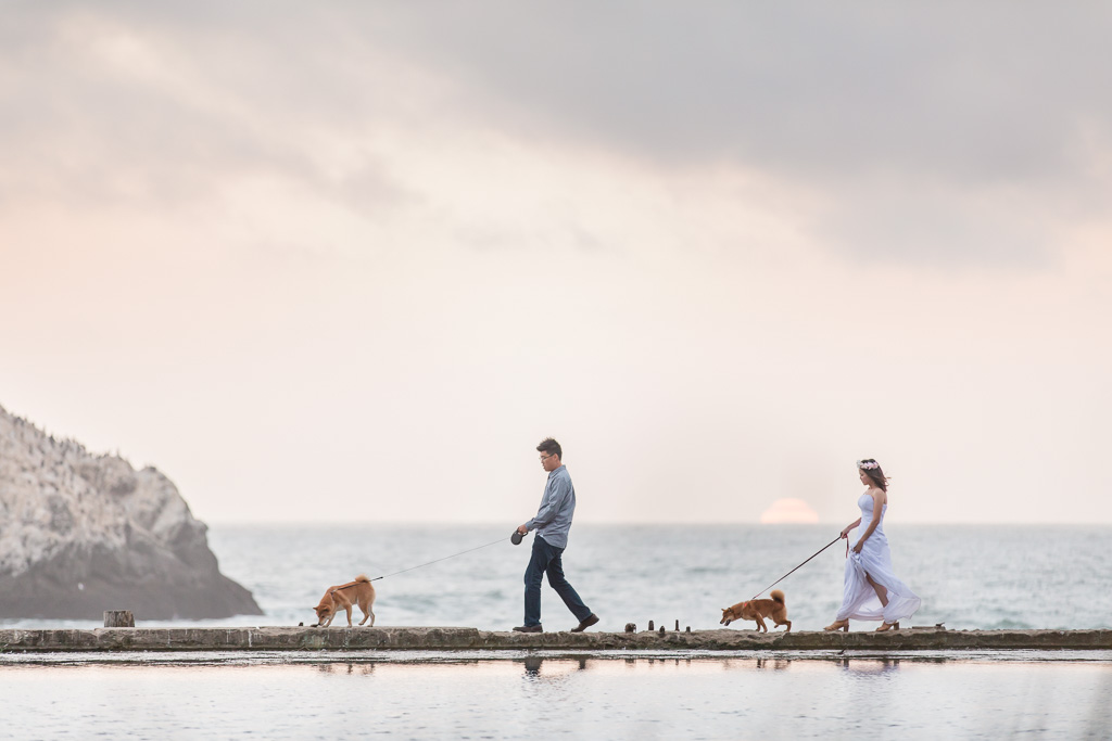 san francisco engagement photo with beloved dogs walking along the water