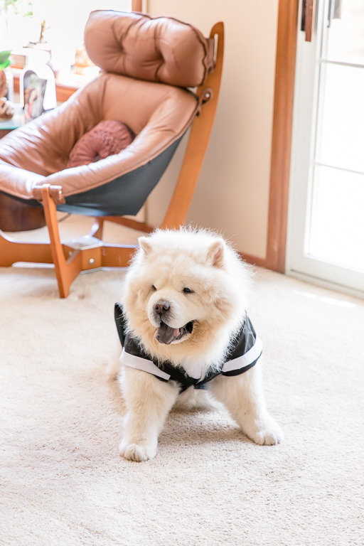 bride and groom's beloved chow chow ring bearer