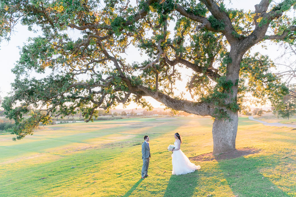 Napa wedding next to a big oak tree with a stunning view