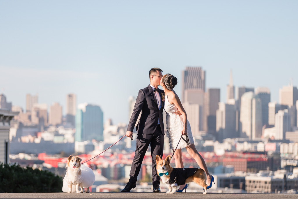corgis wearing suit and wedding dress at Potrero Hill