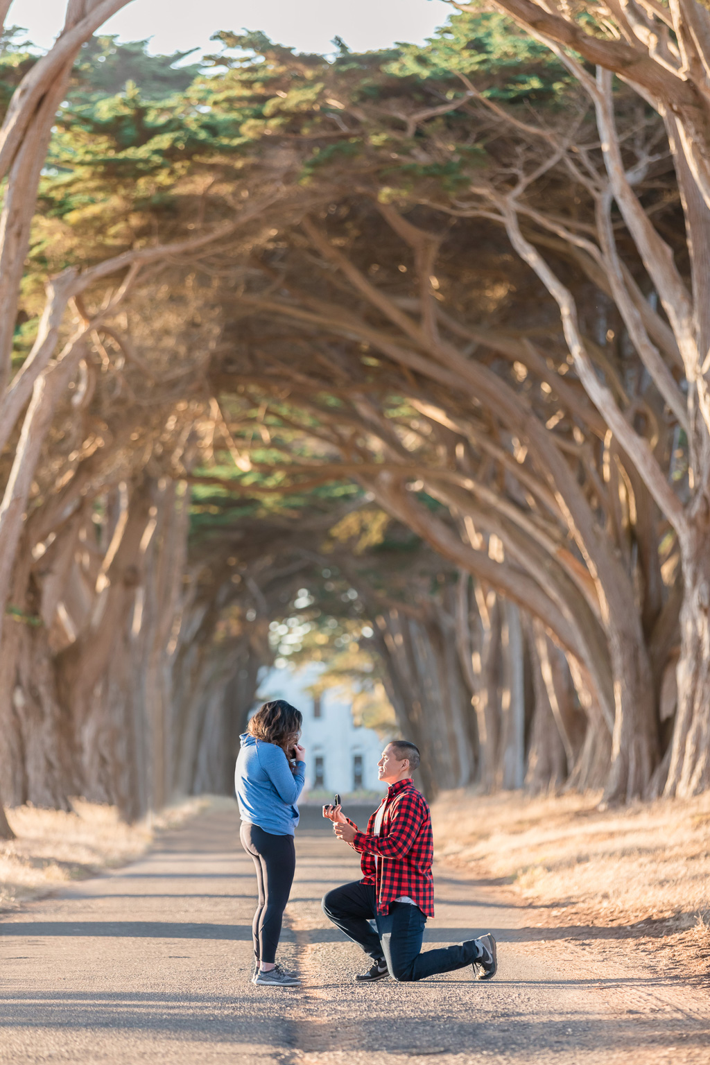 Point Reyes Cypress Tree Tunnel surprise proposal at sunset