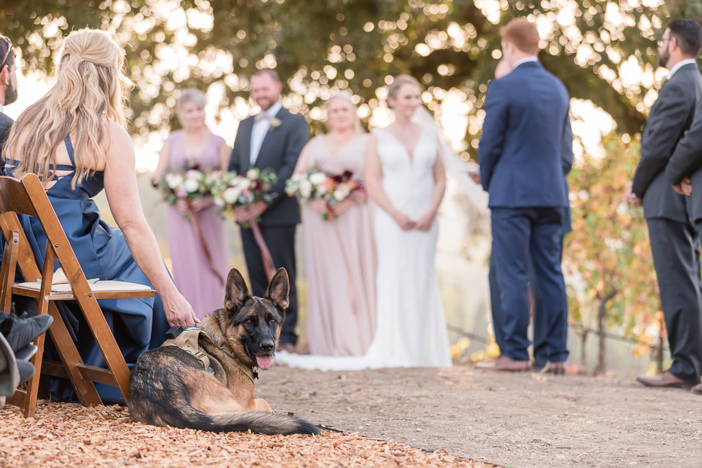 German Shepherd puppy played an important role at the wedding