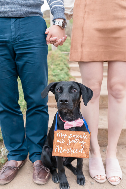 save the date photo with cute puppy wearing a sign and bowtie
