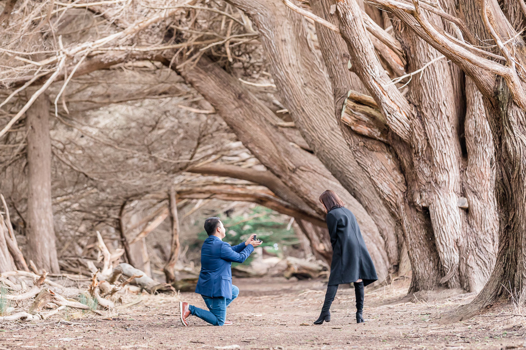 wavecrest open space surprise proposal in the tree tunnel