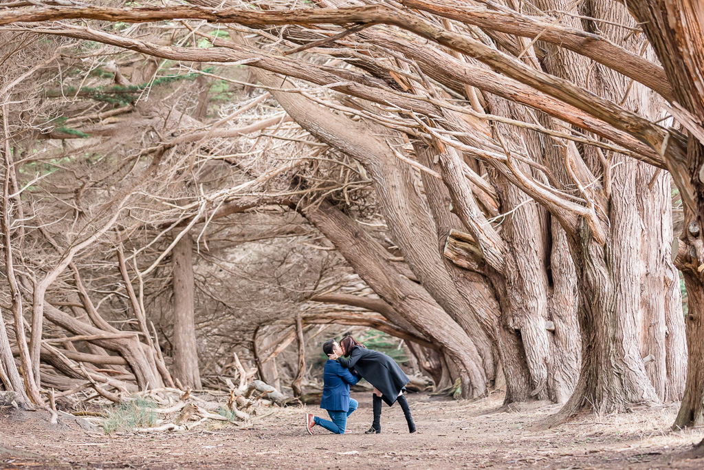 surprise proposal at the wavecrest tree tunnel