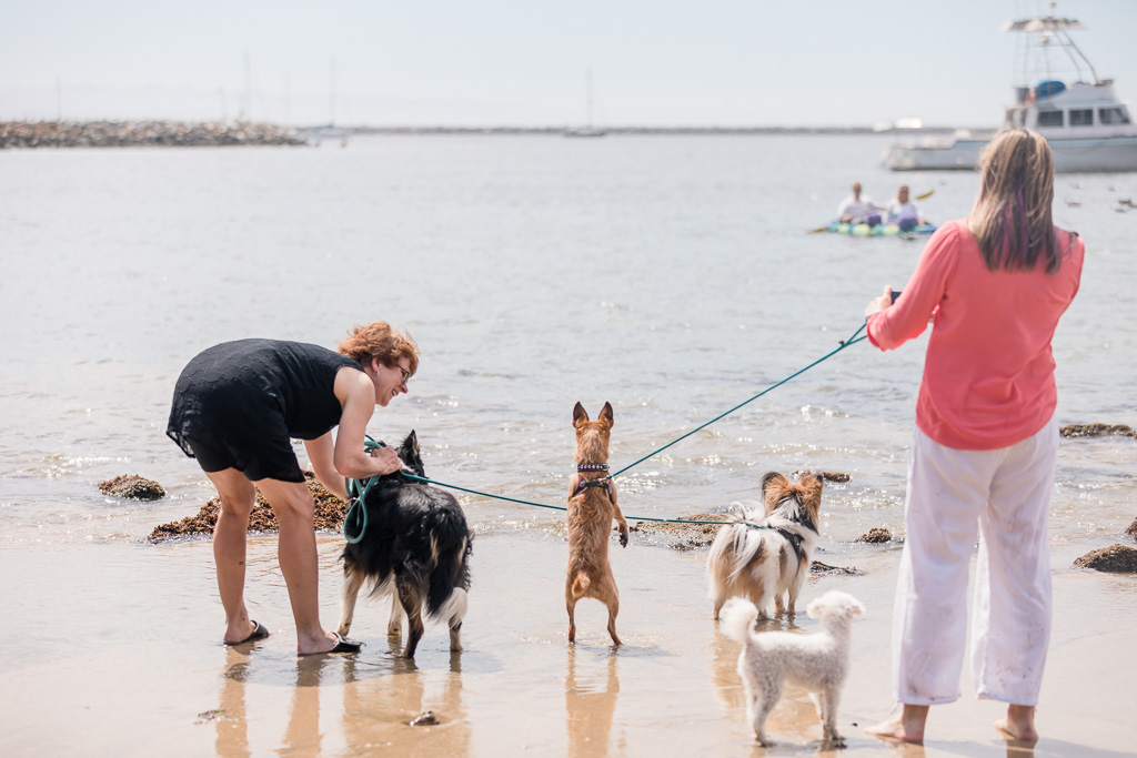 bride and groom's dogs eagerly watching mom and dad arrive