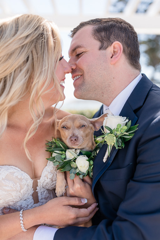 cute photo of bride and groom holding their Chihuahua